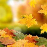 Головні події листопаду